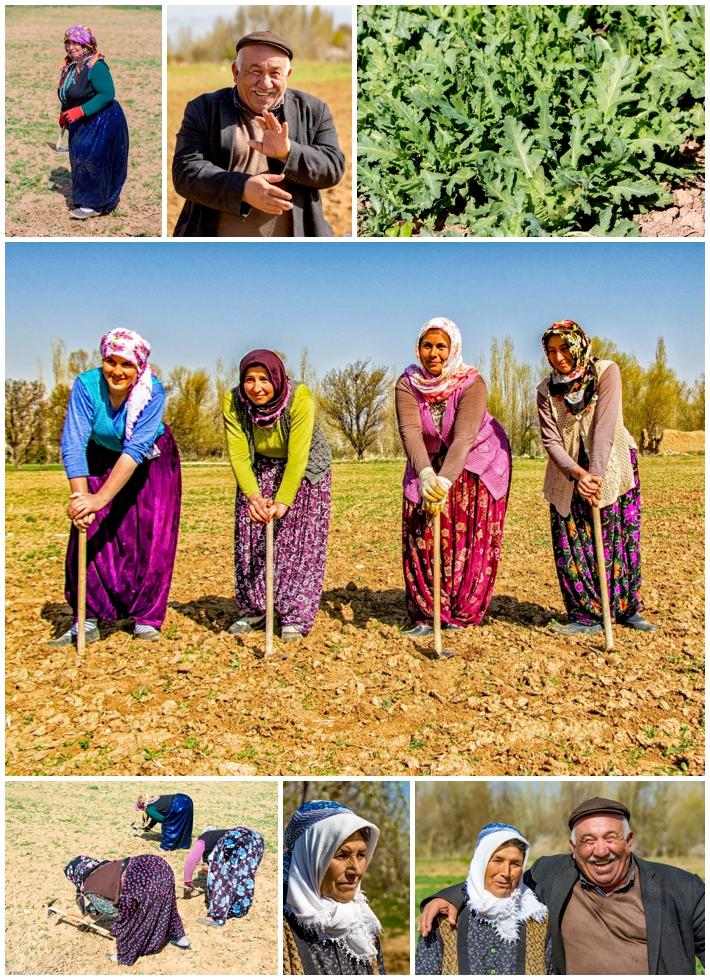 Cappadocia opium fields farmers