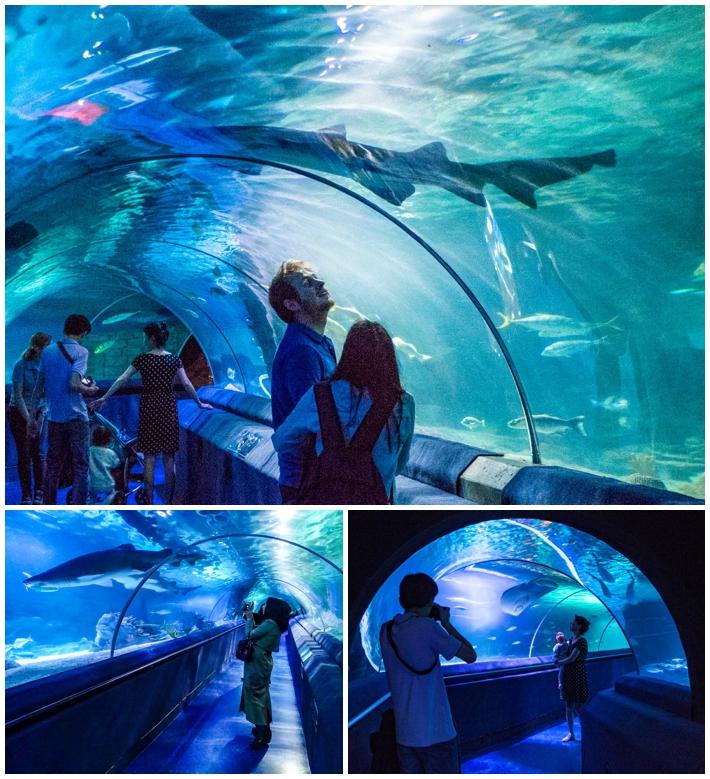 Sea Life Aquarium Istanbul Turkey
