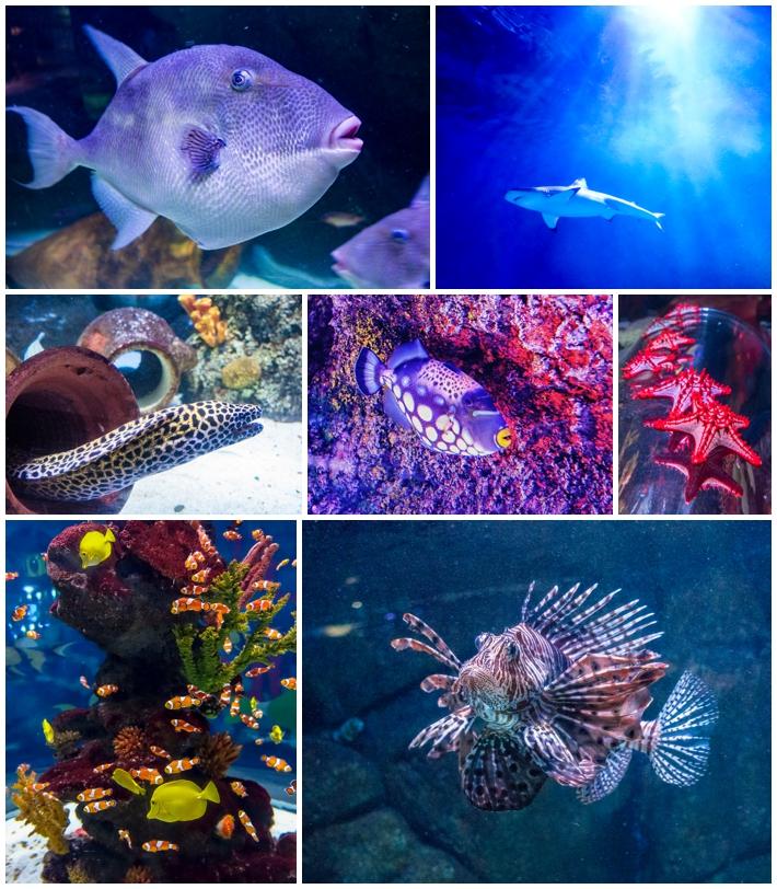 Sea Life Aquarium Istanbul Turkey Fish