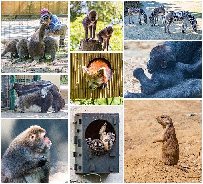 Amsterdam Holland Zoo