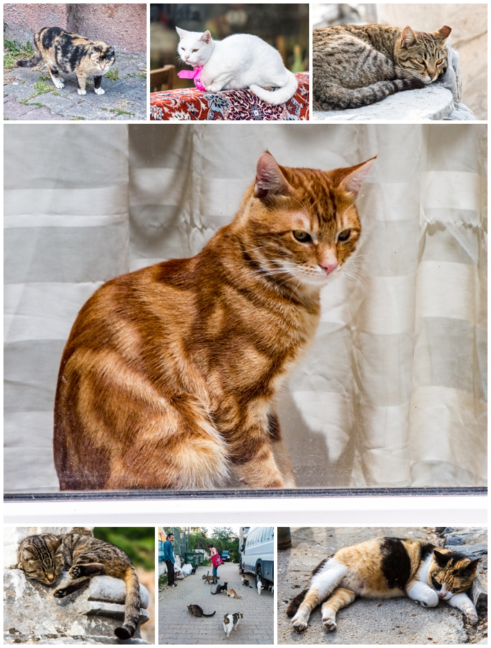 Istanbul Turkey cats