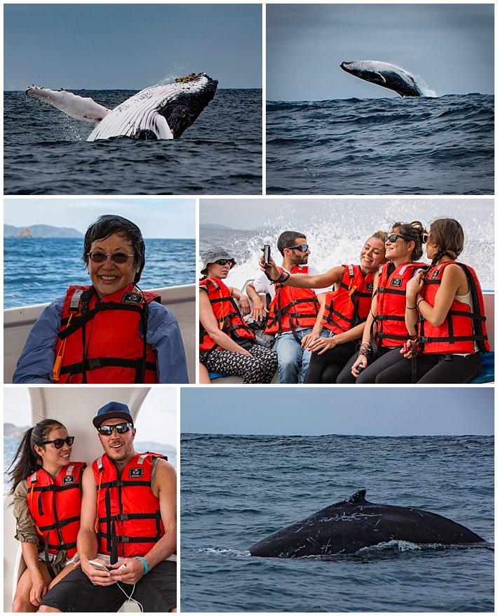 Puerto Lopez Ecuador 2016 whales