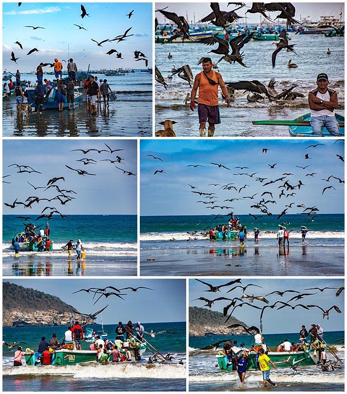Puerto Lopez Ecuador 2016 birds attacking fishing boats