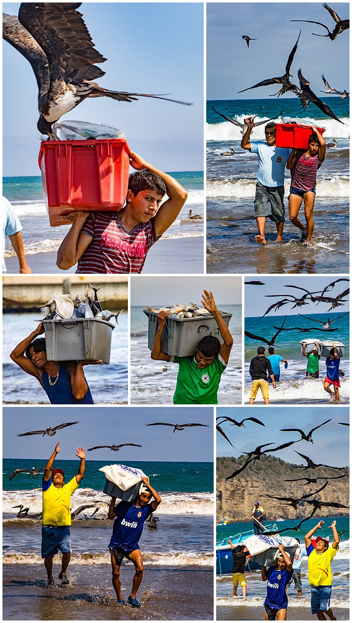 Puerto Lopez Ecuador 2016 birds attacking fishermen runners