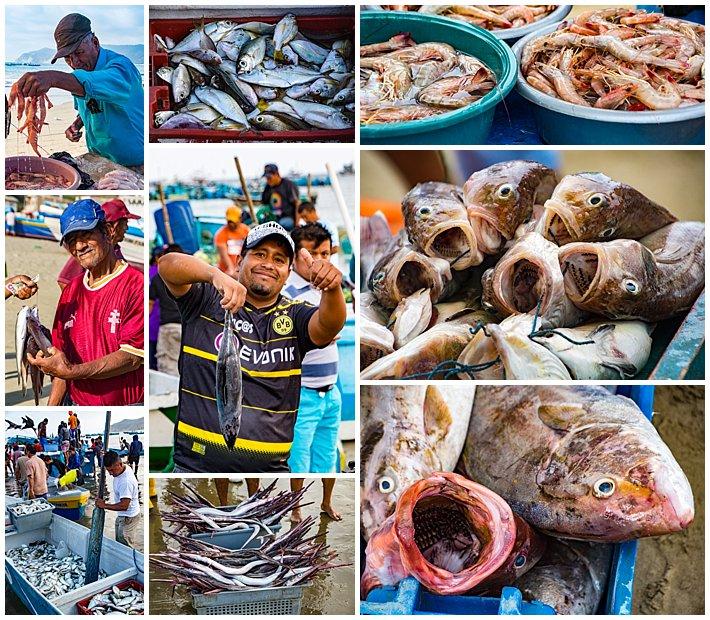 Puerto Lopez Ecuador 2016 fish and fishermen vendors