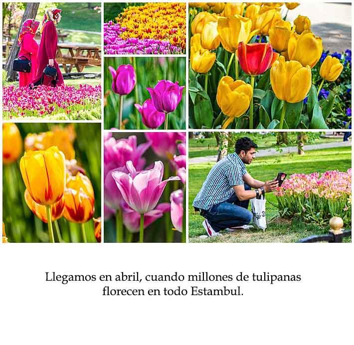 Spanish Class Story - tulips