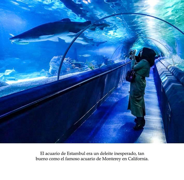 Spanish Class Story - aquarium
