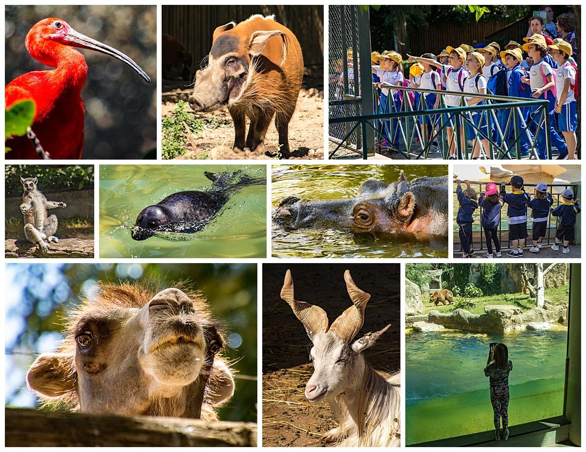 Rome, Italy - zoo