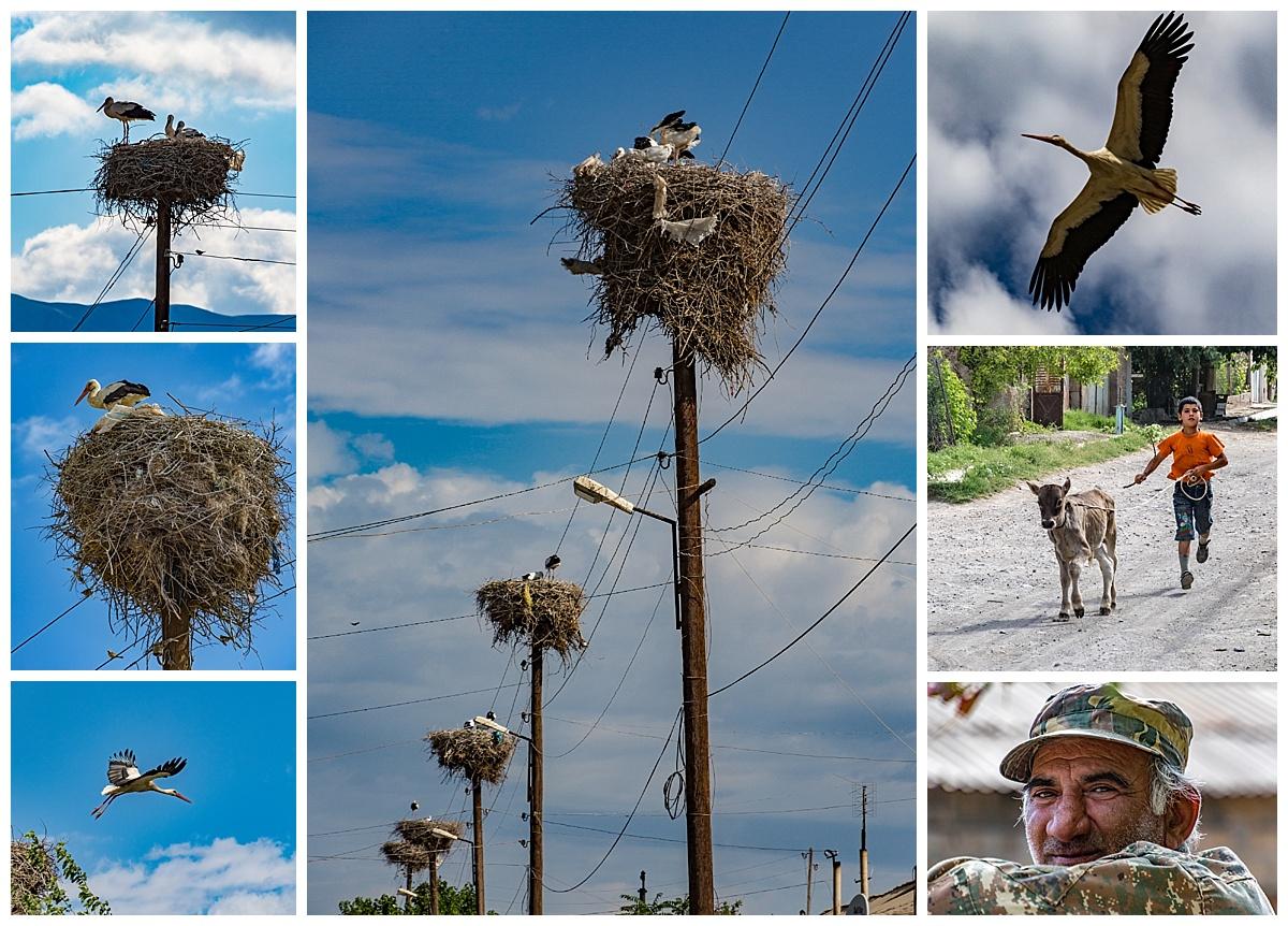 Goris, Armenia - storks