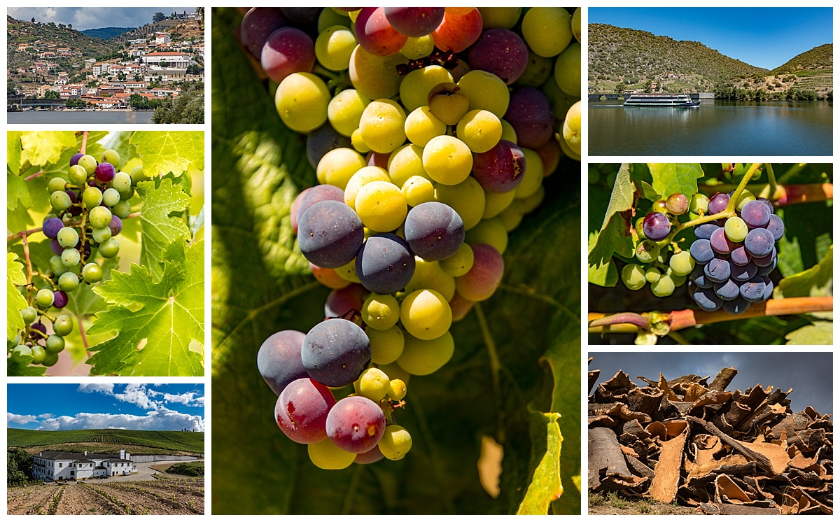 Duoro Valley 2 - grapes