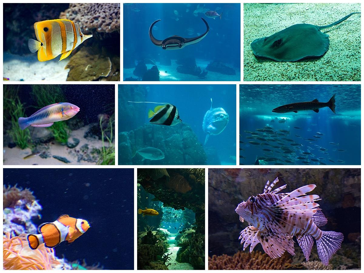 lisbon oceanarium 2- fish