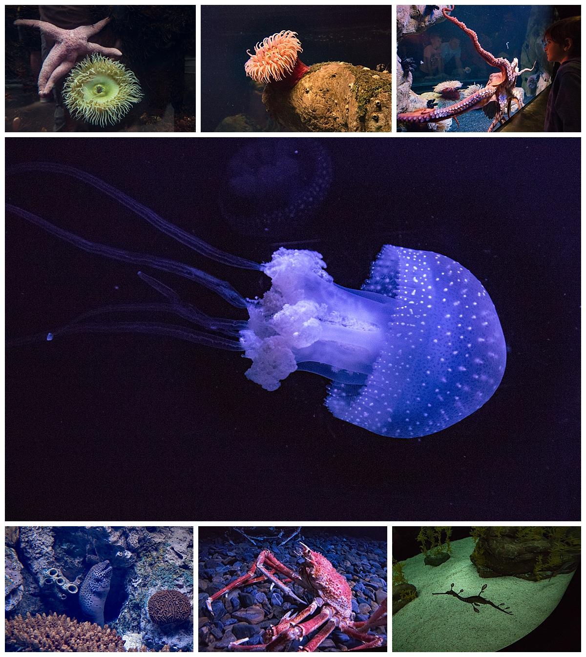 lisbon oceanarium 4- non fish aquatic