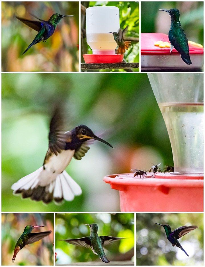 Mindo, Ecuador - hummingbirds