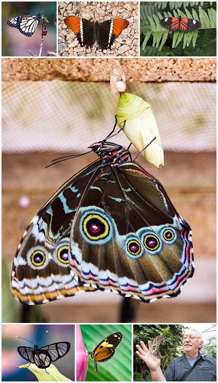 Mindo, Ecuador - butterflies