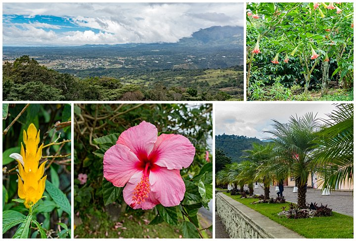 Panama City - garden