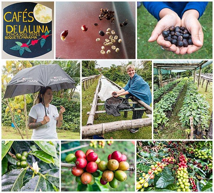 Panama City - coffee plantation tour