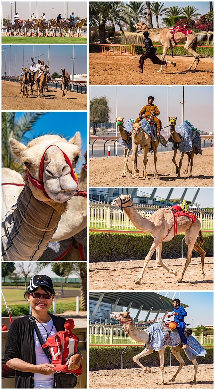 Abu Dhabi, UAE - camel race