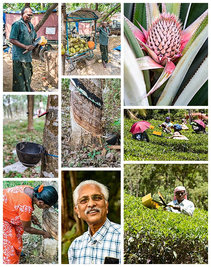 Cochin / Kochi, India - coconut rubber pinneapple