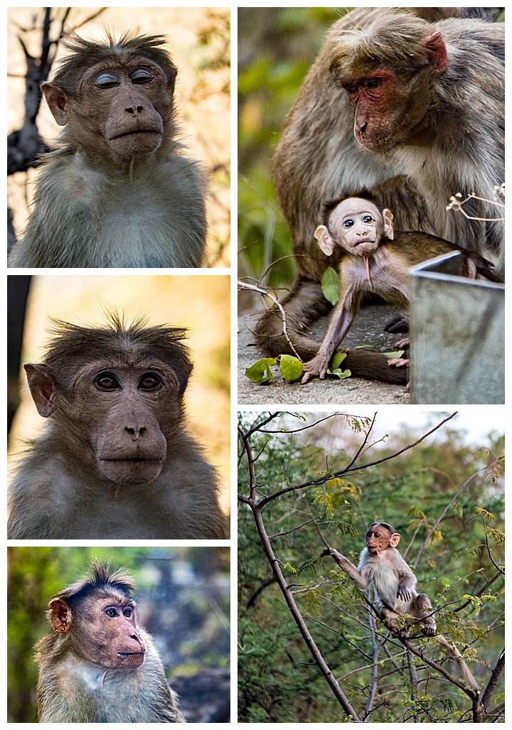 Cochin / Kochi, India - monkeys