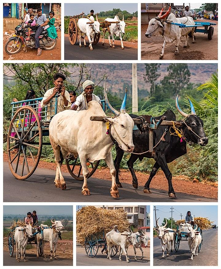 Hubli, India - ox carts