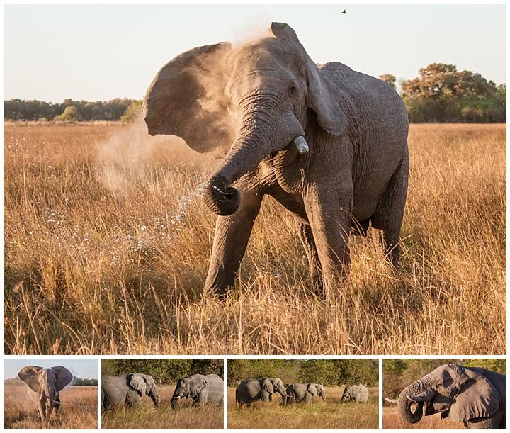 Botswana Khwai Camp - elephants