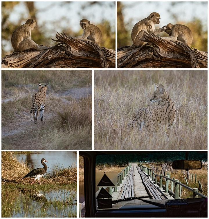 Botswana Khwai Camp - misc