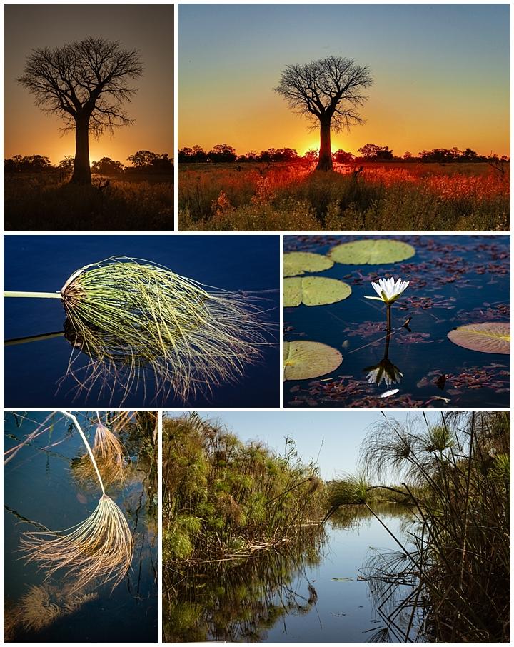 Botswana Okovango Delta - plants