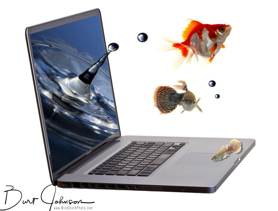 blj_20111201_fish_jump_laptop-2-Edit.jpg