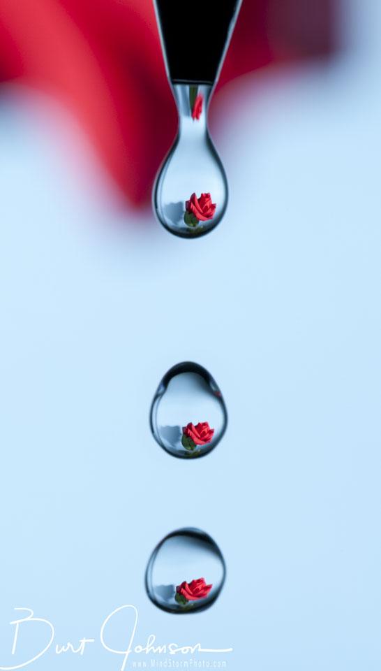 blj_rose-in-3-drops-Edit.jpg