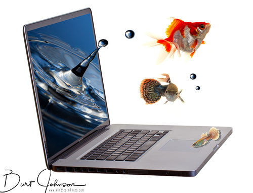 blj_20111201_fish_jump_laptop-2-Edit.jpg