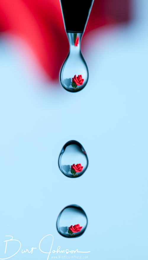 blj_rose-in-3-drops-Edit.jpg